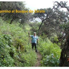 Trekking BOSQUES DE ZARATE Ruta normal 25Ene